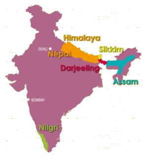 Carte du thé Darjeeling